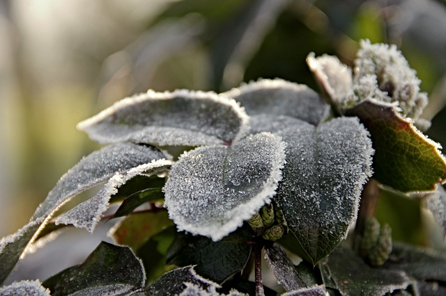 Leaves, Ripe, Frozen, Frost, Winter, Nature, Cold