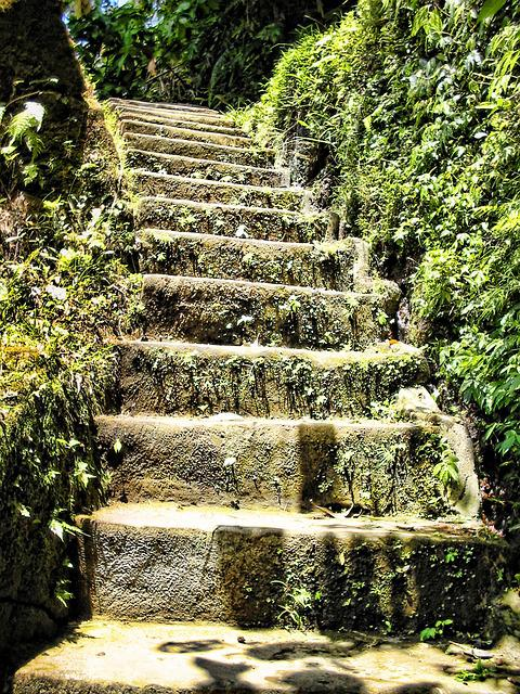 Stairs, Overgrown, Rise, Leaves, Bush, Stone Stairs