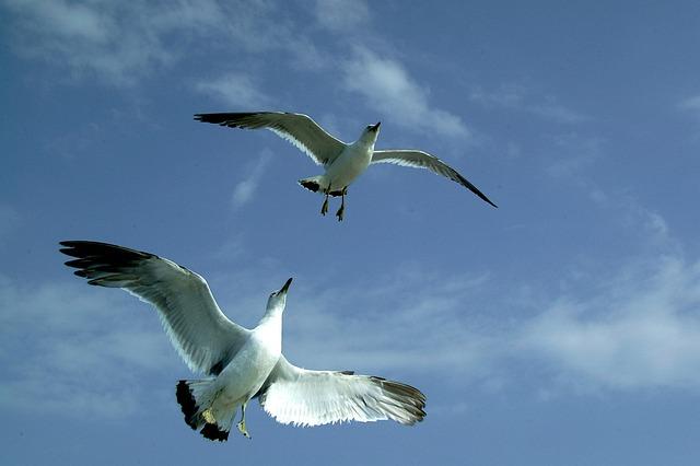 Seagull, Sea, Sky, Cloud, Blue, Vision, Rising, Goal
