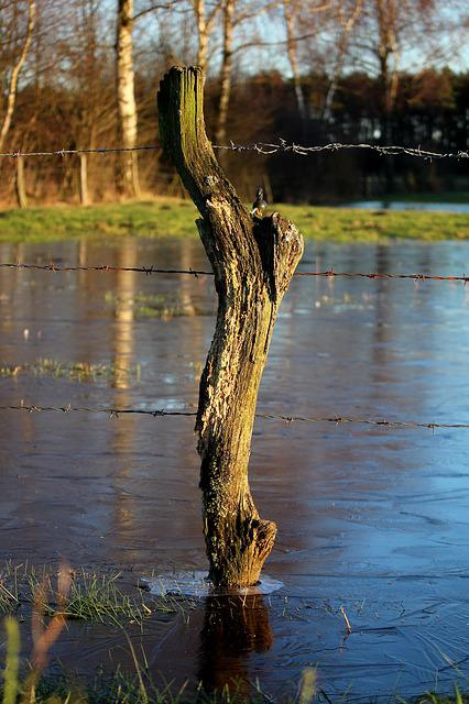 Waters, Nature, Reflection, Tree, River, Fence, Pasture
