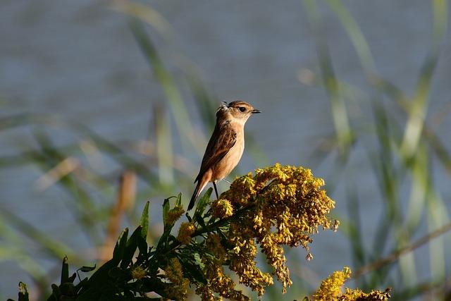 Animal, River, Waterside, Flowering Plant, Autumn, Bird