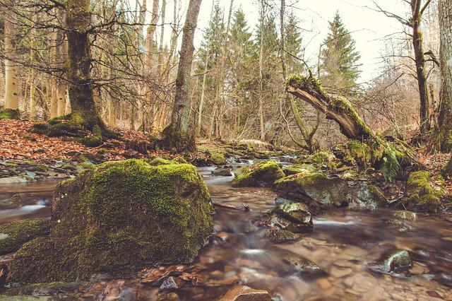 Bach, River, Source, Nature, Forest, Local Recreation