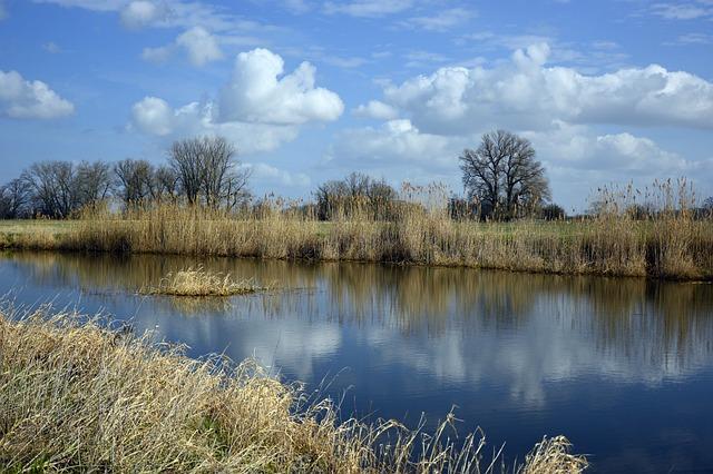 River, River Landscape, Landscape, Nature, Reed, Bank