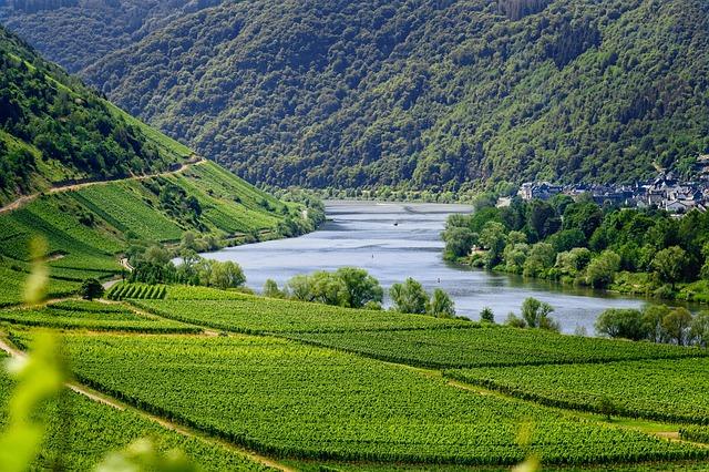 Mosel, River, Vineyards, Wine, Vines