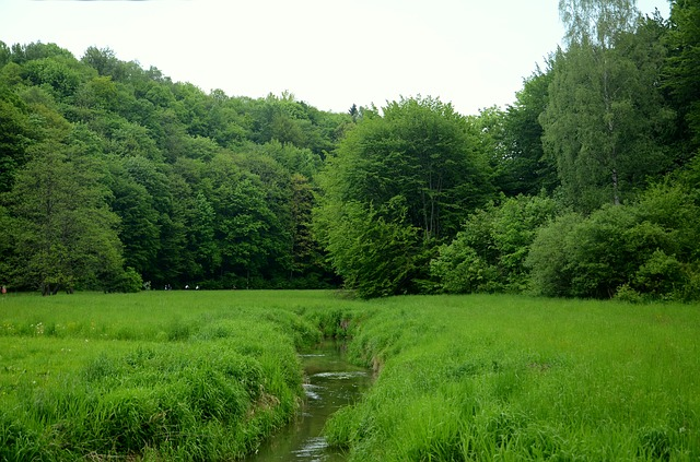 Brook, River, The Brook, Forest, Meadow, Tree, Poland