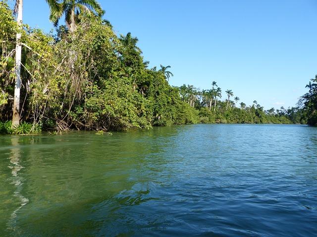 Belize, River, Rainforest, Jungle, Boot, Nature