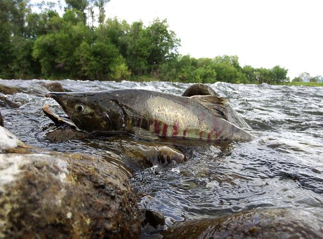 River, Fish, Fishing, Alloy, For, Roll, Inflow, Beach