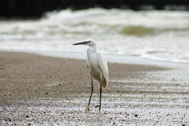 Animal, Sea, River, Estuary, Sandy, Wave, Beach
