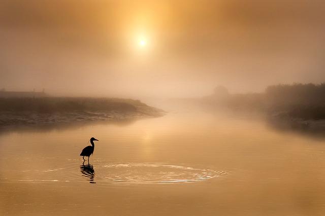 Grey Heron, River, Silhouette, Sun, Sunlight, Fog, Mist