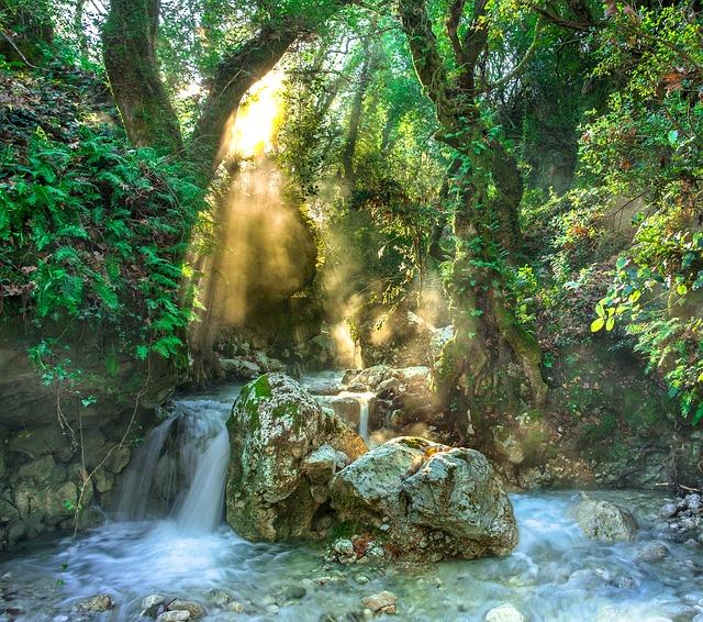 Rainforest, Jungle, Stream, Trees, Forest, River