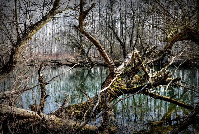 Forest, Luhy, The Floodplain, Water, River, Trees