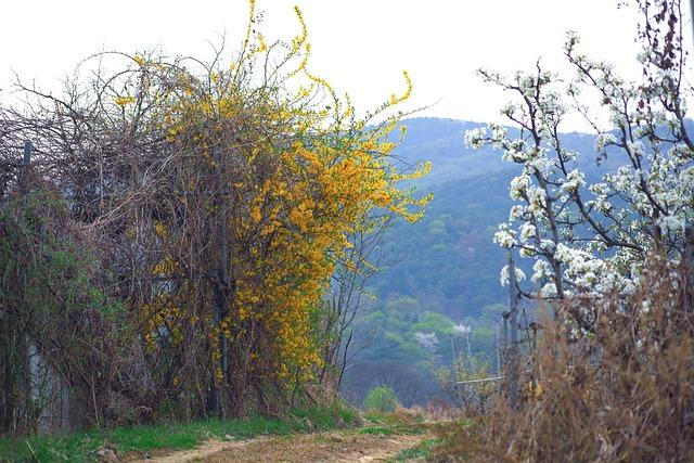 Wood, Flowers, Nature, Landscape, Riverside