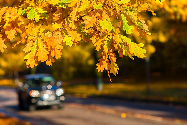 Autumn, Car, Outdoor, Fall, Road, Driving, Nature
