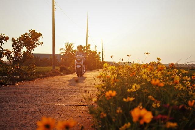 Motorcycle, Road, Wildflowers, Flowers, Path, Lane