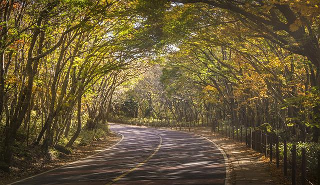 Autumn, Autumn Leaves, Wood, Forest, Gil, Road, Jeju