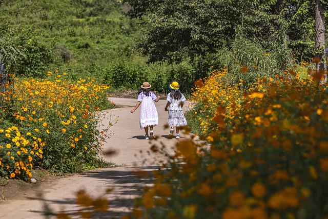 Children, Girls, Flowers, Road, Tree, Forest, Nature