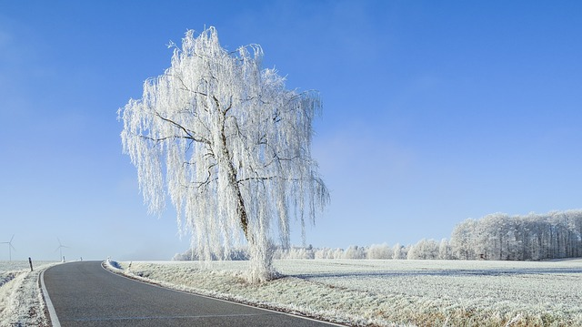 Wintry, Hunsrück, Road, Snow, Hoarfrost