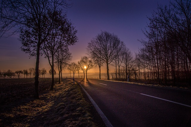 Road, Sunrise, Trees, Avenue, Yellow, Blue, Lighting