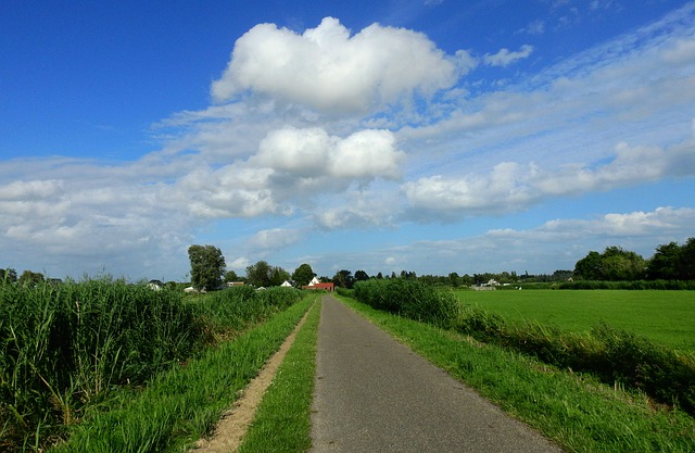 Dutch Countryside, Rural, Road, Rushes, Grass, Meadow