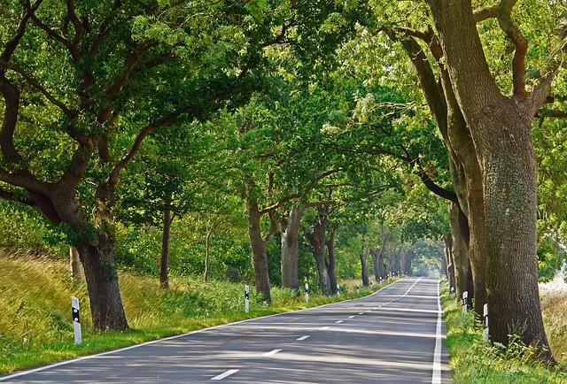 Rügen, Avenue, Road, Summer, Old Trees
