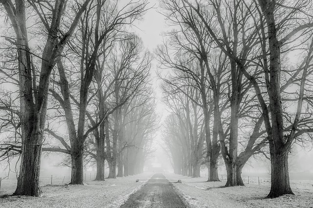 Winter, Snow, Trees, Road, Travel, Fields, Farm, Rural