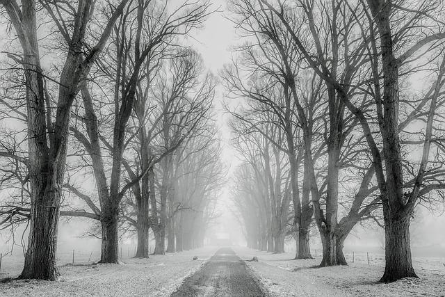 Winter, Snow, Trees, Road, Travel, Fields, Farm, Rural