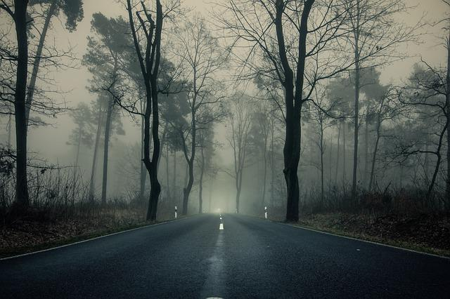 Misty Green Forest Nature River Beautiful 1ziw: Free Photo Road Tree Mood Dusk Forest Nature Fog