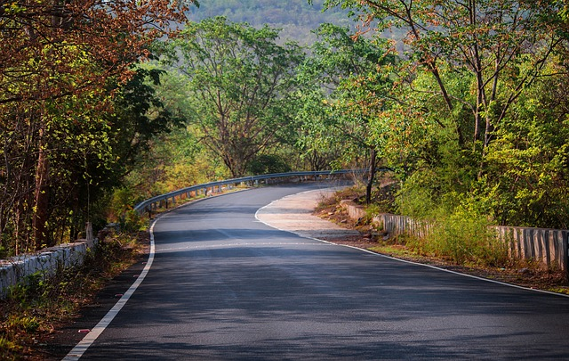 Nature, Tree, Road, Wood, Guidance