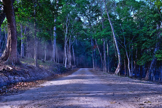 Woods, Spooky Dirt Road, Moody, Road, Path, Misty