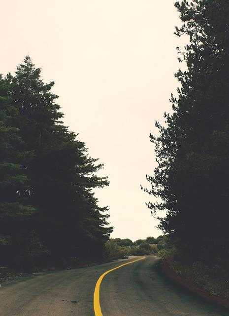 Forest, Road, Trees, Perspective, Winter, Roadtrip