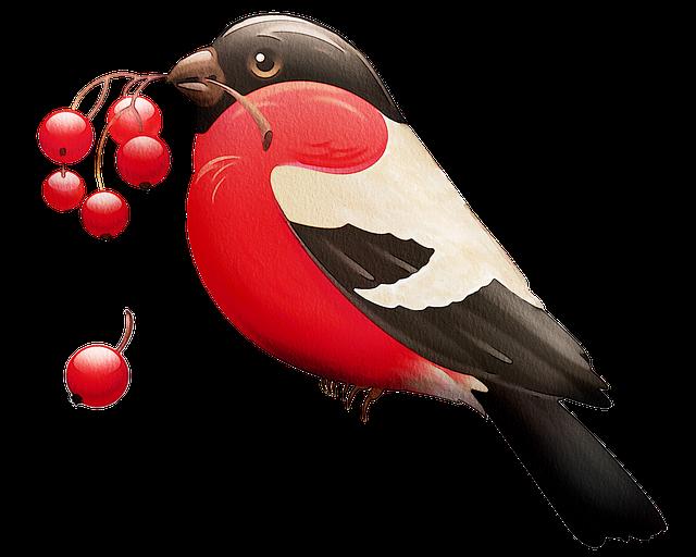 Watercolour Red Robin, Watercolor, Robin, Bird
