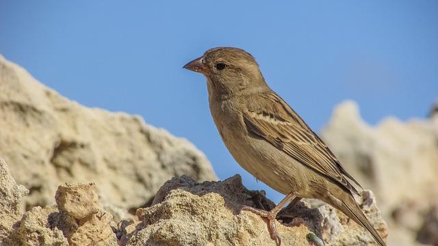 Nature, Outdoors, Bird, Wildlife, Animal, Rock, Sparrow