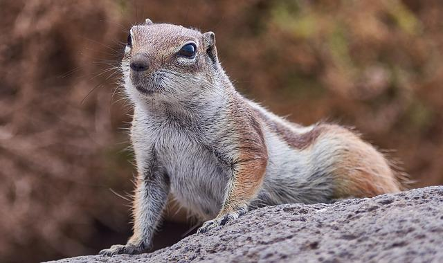 Gophers, Nature, Animal World, Animal, Wild, Rock