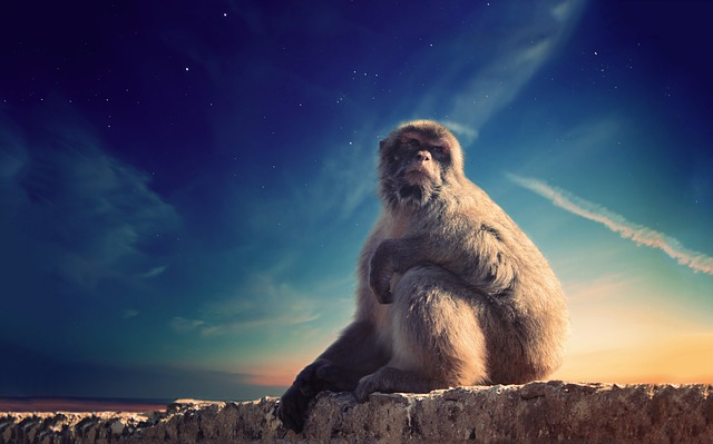 Animal, Monkey, Outdoors, Rock, Sky, Wildlife