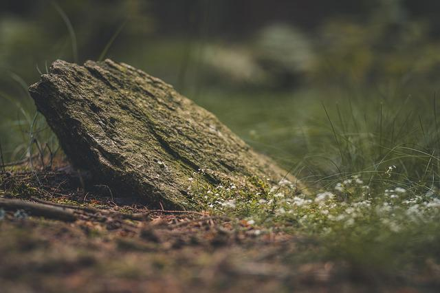 Stone, Grass, Forest, Nature, Rock, Natural Stones