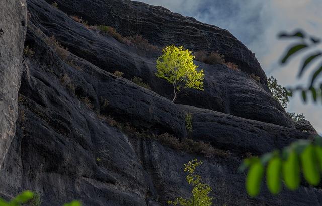 Bastei, Birch, Saxony, Germany, Landscape, Nature, Rock