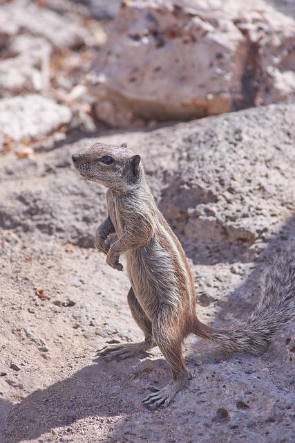 Gophers, Nature, Animal World, Animal, Wild, Rock