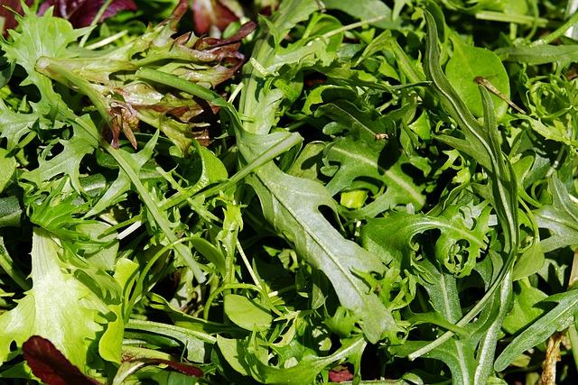 Salad, Cut Salad, Lollo-rosso, Oak Leaf-red, Rocket