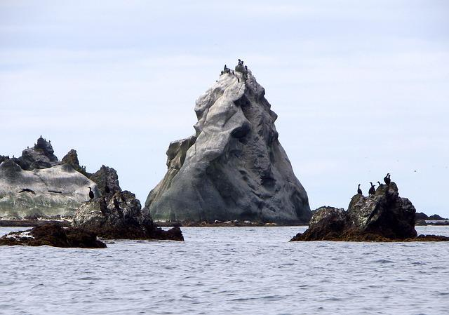 Bird Colonies, Rocks, Islands In The Ocean, Bay, Gulls