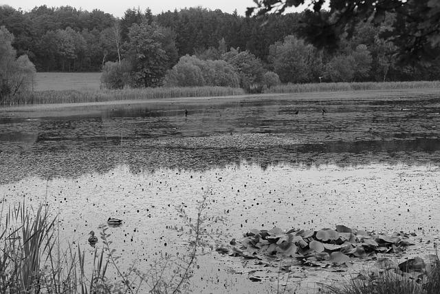 Rodder Maar, Maar, Brohltal, Vulkaneifel, Autumn