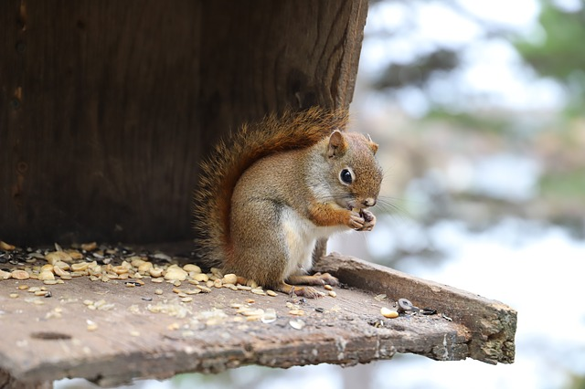 Mammal, Cute, Wood, Squirrel, Rodent, Animal World