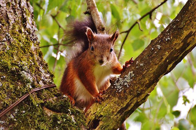 Squirrel, Nager, Cute, Nature, Rodent, Climb, Garden