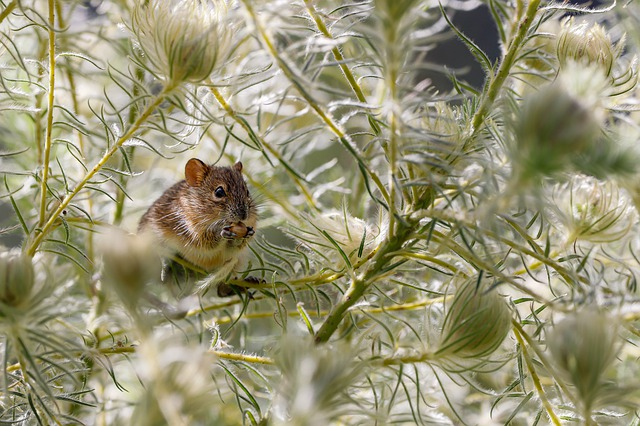 Mouse, Eat, Rodent, Cute, Animal, Nature, Mammal, Rat