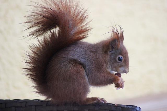 Mammal, Squirrel, Cute, Rodent, Animal World, Sit