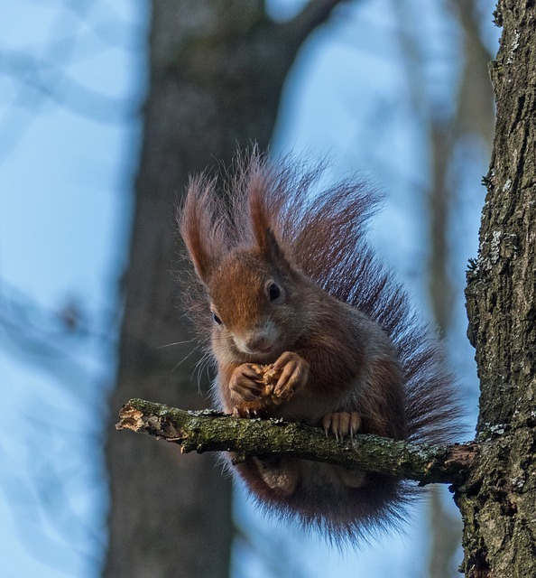 Squirrel, Mammal, Tree, Wood, Rodent, Nature