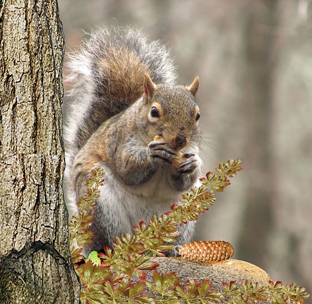 Squirrel, Tree, Eat, Nut, Rodent, Squirrel In The Tree