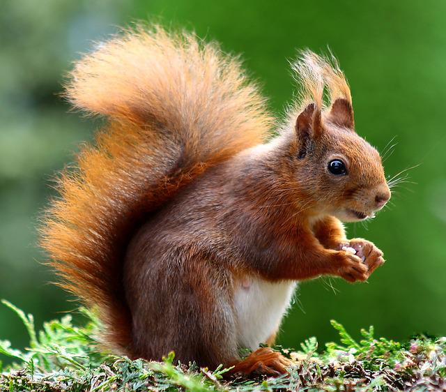 Squirrel, Animal, Cute, Rodents, Creature, Animal World