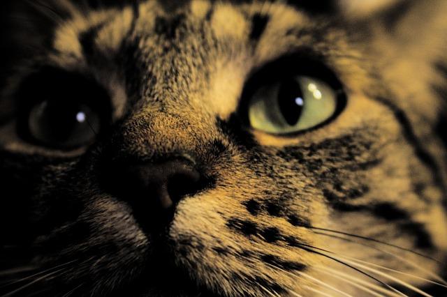 Cat, Night, Rodeur, Night Fell, Night Cat