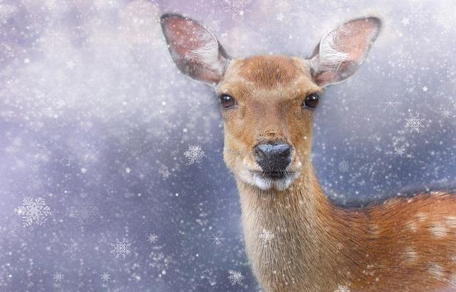 Roe Deer, Winter, Wintry, Animal, Fallow Deer, Mammal