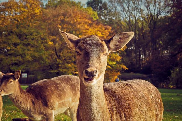 Roe Deer, Animal, Wild, Wildlife Park, Eat, Portrait